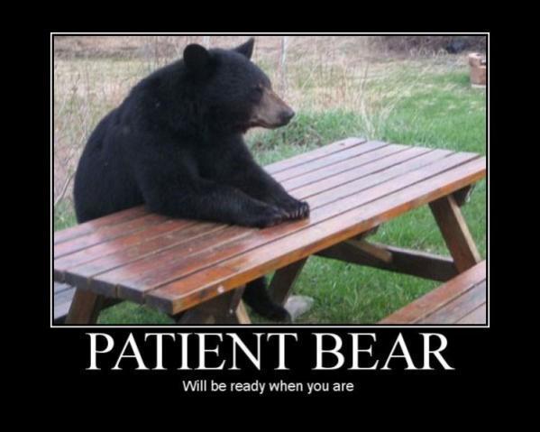patient-bear_
