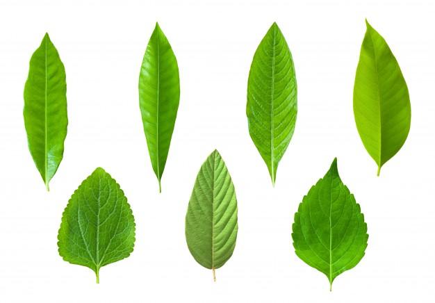 flora-summer-beautiful-tree-herb_1172-358